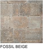 dublin_fossil