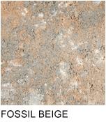 anglia_fossil